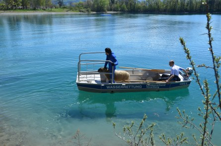 Evakuierung von Tieren mit den Hochwasserbooten