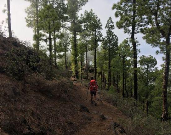 Pine Forests La Palma