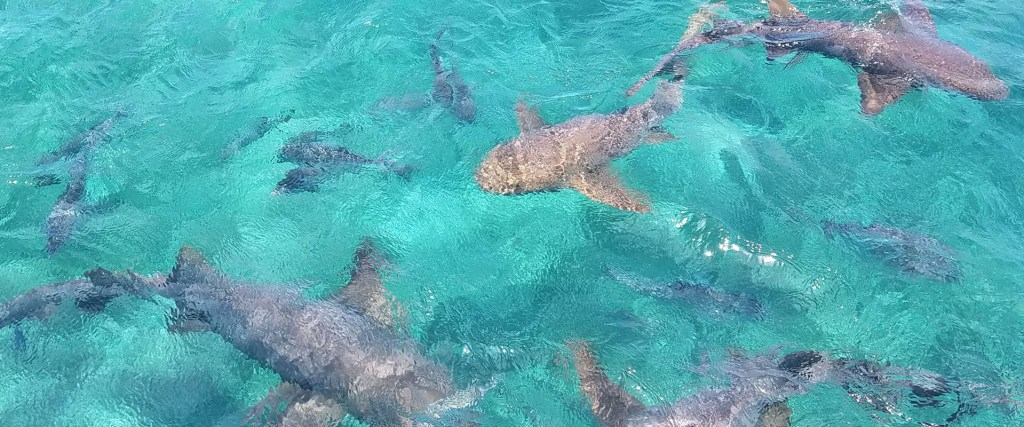 Felicity-Sailing-Belize_Shark-Ray-Alley