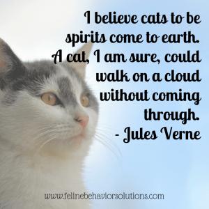 Cat Spirits Walk On Clouds