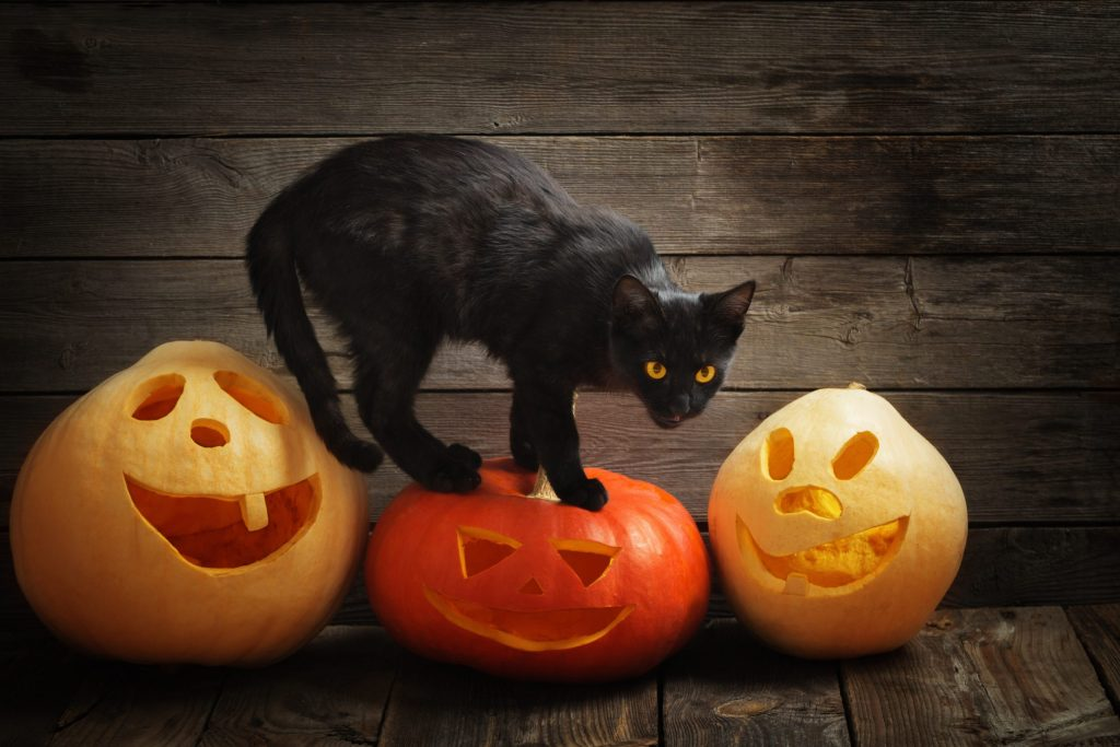 Cat Safety on Halloween