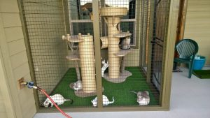 Chadly Catio 1