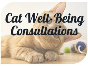 Cat Well-Being Consultations
