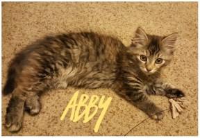 abby2