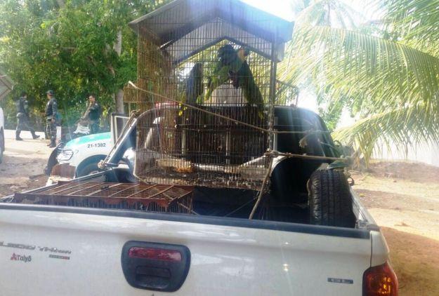 APA Costa dos Corais - apreensão de animais (3)
