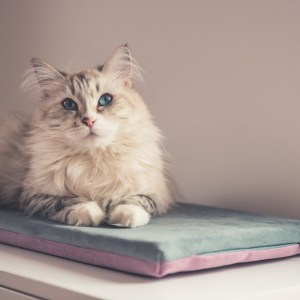 legowisko dla kota dwustronne szare