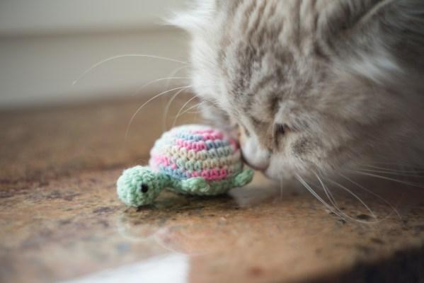 zółw zabawka dla kota