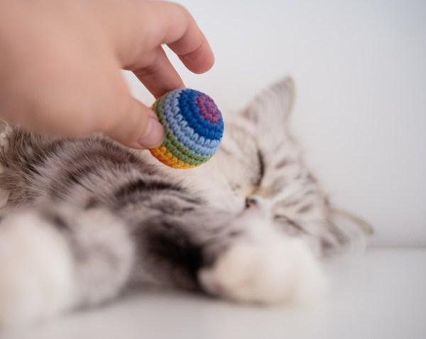 tęczowa piłeczka dla kota