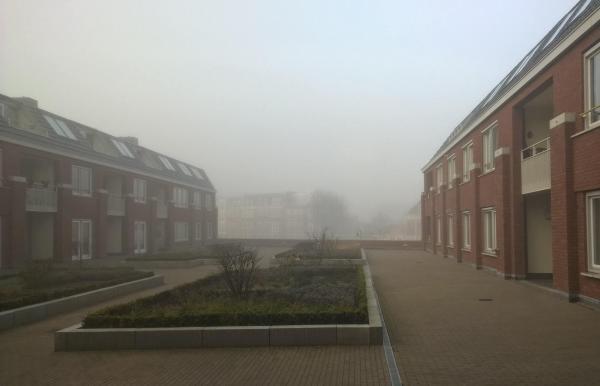 gouda ceata dimineata