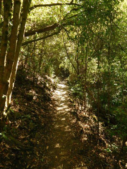 alum cliffs track
