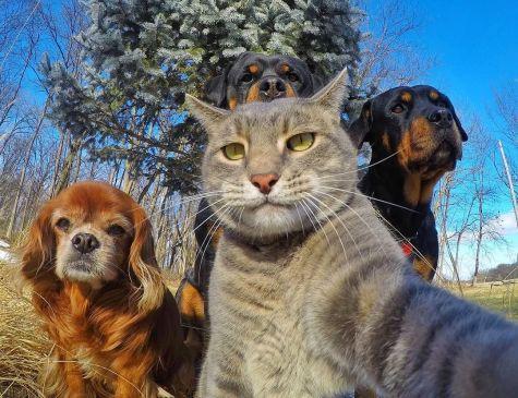 c557d204-selfie-with-the-crew
