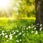 Mi extraña primavera