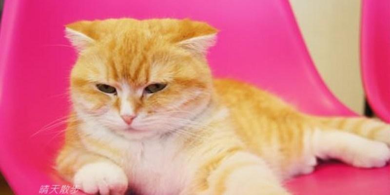 [2018年更新版]台中寵物友善餐廳懶人包:台中超過50家寵物友善餐廳大攻略~帶毛小孩出門 不愁沒地方喝咖啡、吃美食啦!(請務必遵守店家規範喔)