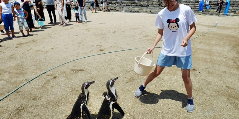 長崎親子遊|長崎企鵝水族館~沙灘餵企鵝體驗 一組只要100日圓