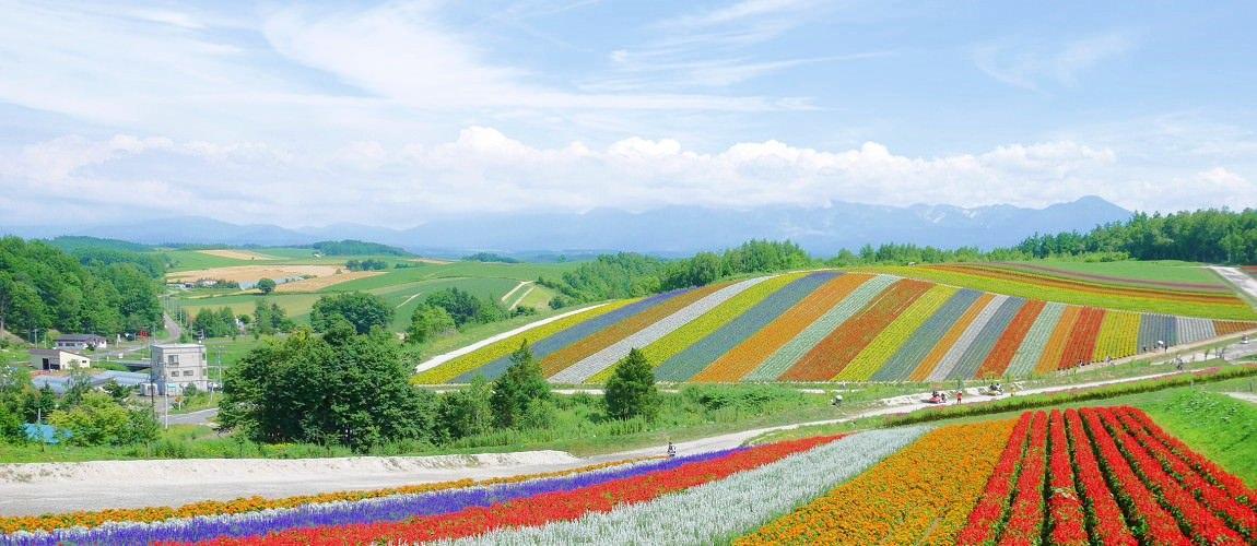 日本自由行 北海道、東北、東京、京阪、岡山、鳥取、瀨戶內海的一個月親子遊