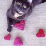 Knitted Catnip Delight2