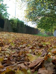 Autumn (1)