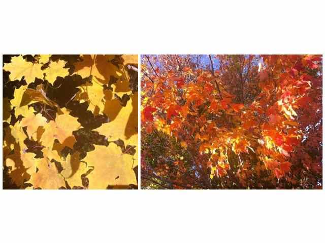 leaves 8