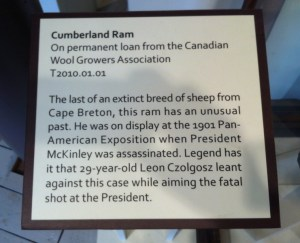 sheep plaque