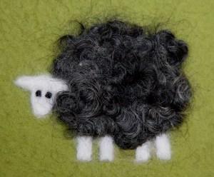 sheep1close-1