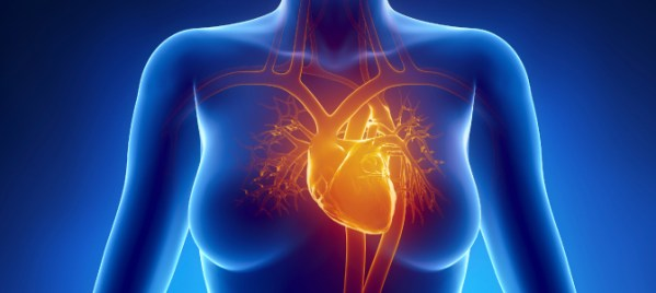 heart and coronary arteries of a woman