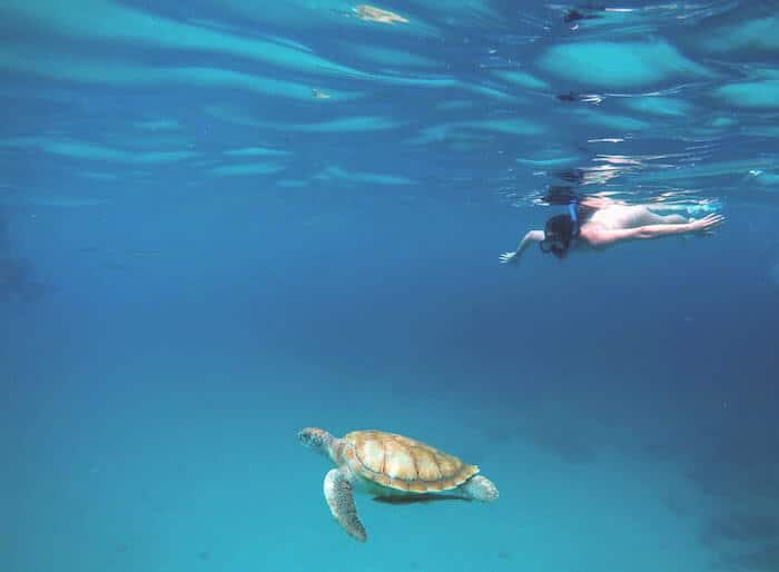 Snorkeling with turtles, trip to Barbados