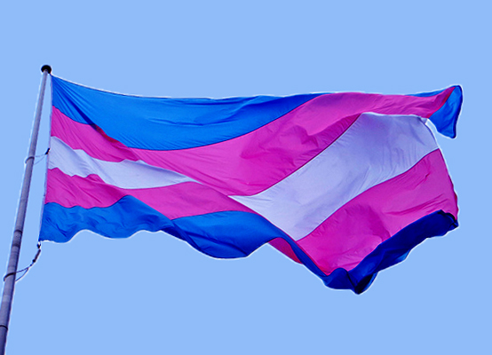 Image result for transgender flag