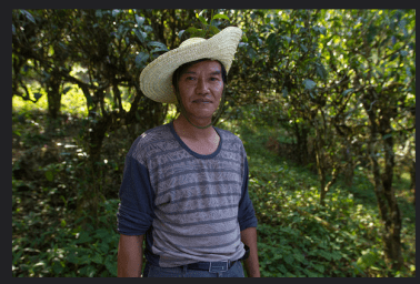 Local tea farmer based in Duoyi Village.