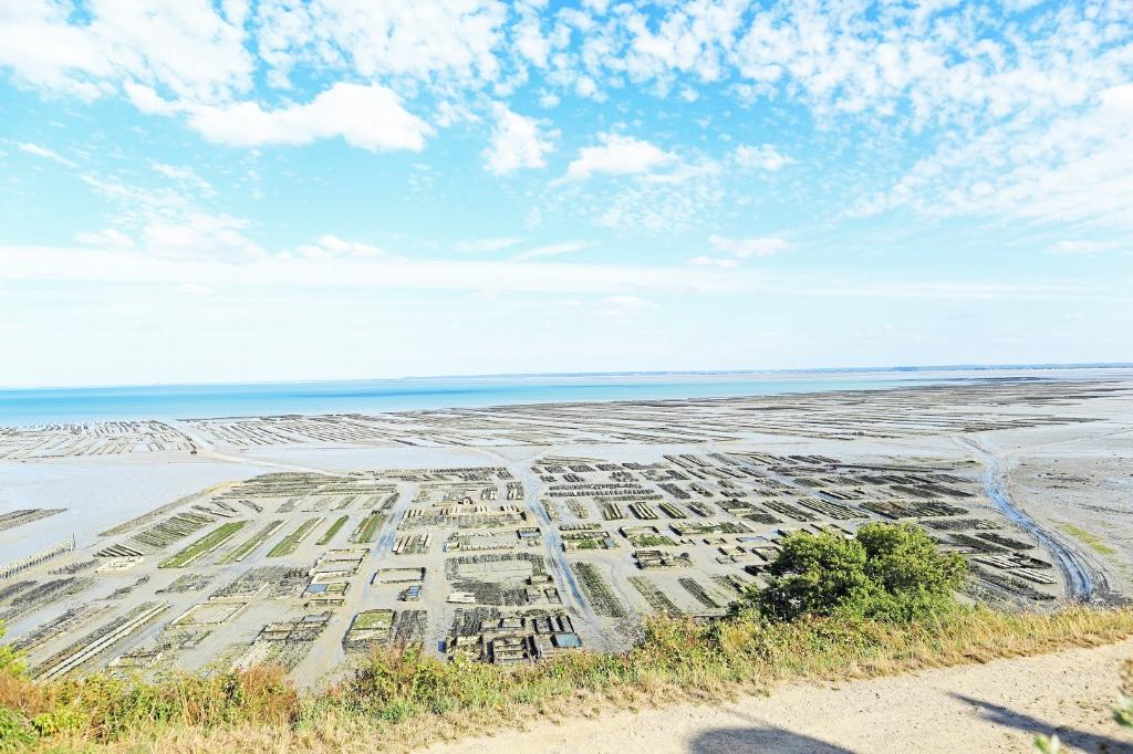 Cancale - parc à huitres à marée basse