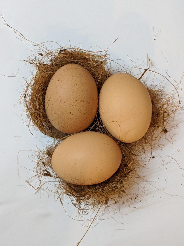 raw egg fertility
