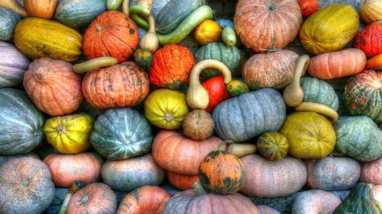 Pumpkin Blood Deficiency Food