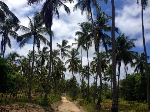a caminho do coqueiro solitário