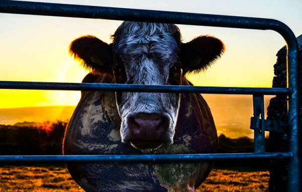 Cowspiracy: Can a Film Change Your Life?