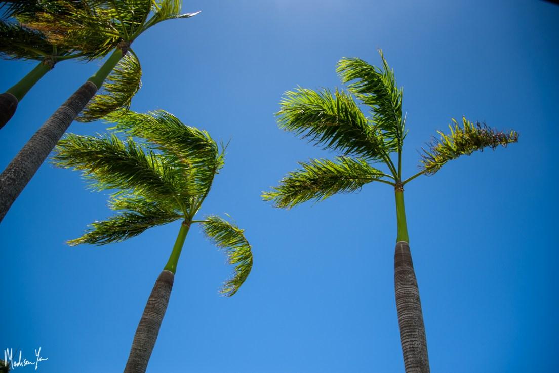 Travel: ...fajardo, Puerto Rico