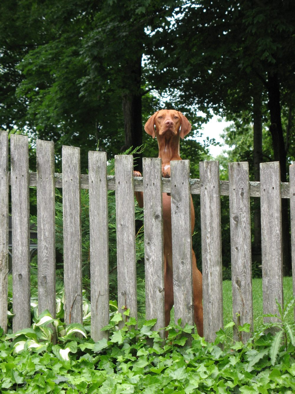 How To Build Dog Fences They Won T Dig Under Or Through Fence Supply Online