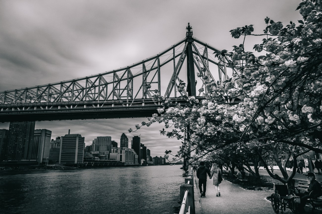 Cherry Blossoms on Roosevelt Island NYC with Sony RX100V
