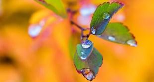 Jesen , feng shui