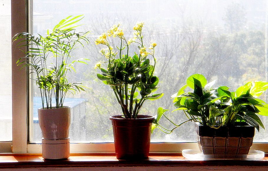 Feng Shui Q & A : Plants In The Bedroom