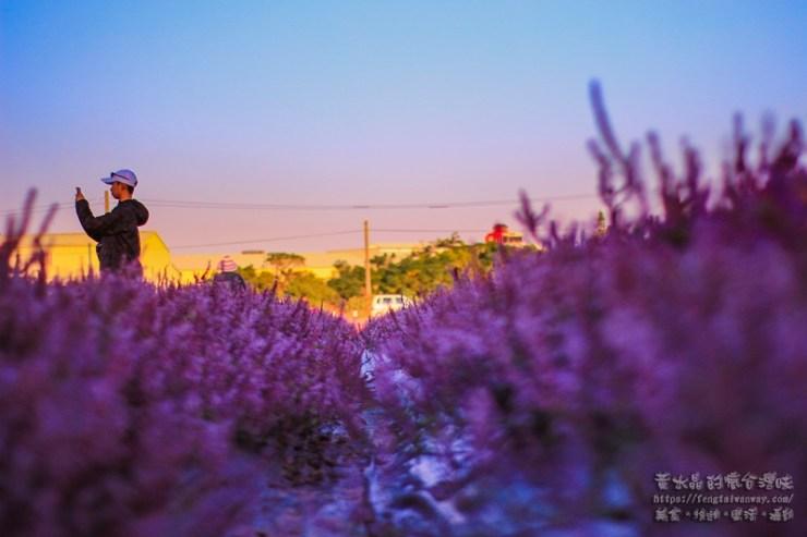 2018桃園花彩節楊梅場【楊梅景點】|網美及風景攝影師必拍重點;獨有仙草花海有如台版普羅旺斯 @黃水晶的瘋台灣味