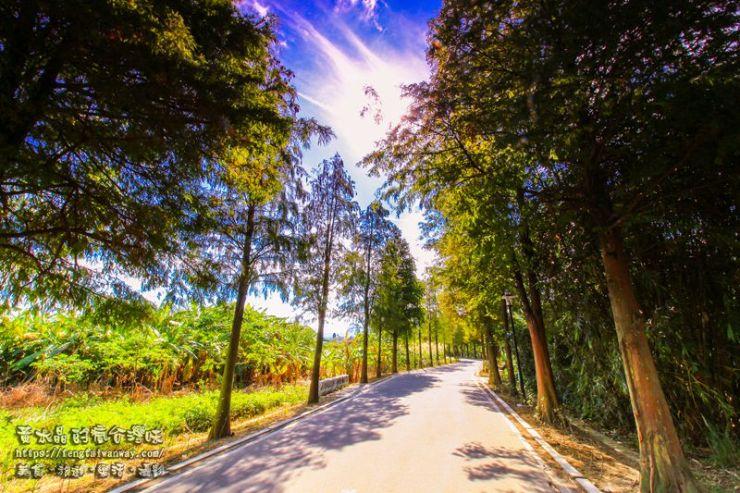 落羽松大道【大溪景點】|桃園落羽松景點季節限定;1公里的漸層鐵鏽色網美景點 @黃水晶的瘋台灣味