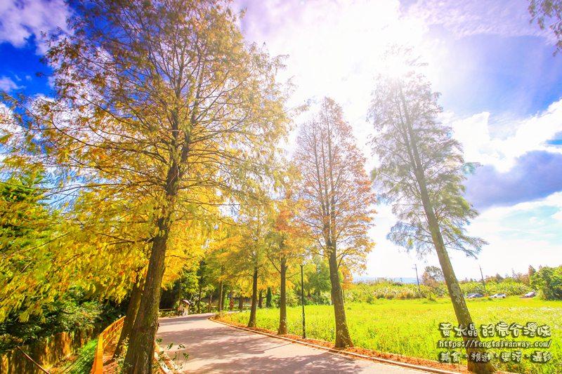 落羽松大道【大溪景點】 桃園落羽松景點季節限定;1公里的漸層鐵鏽色網美景點 @黃水晶的瘋台灣味