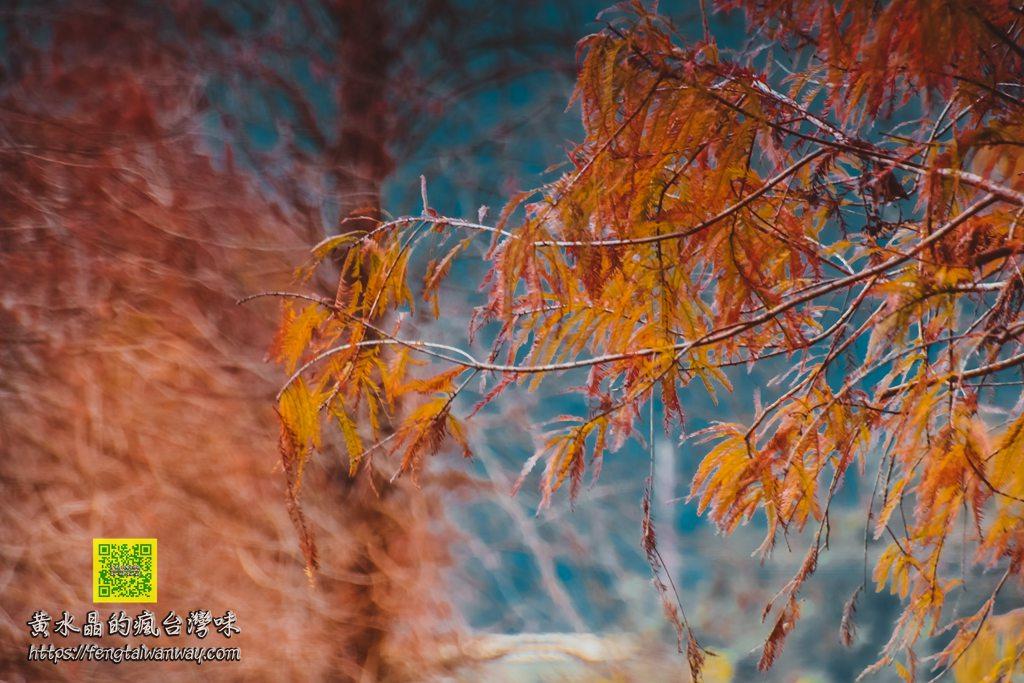 蜊埤湖畔落羽松【宜蘭景點】|員山鄉的寧靜天空之鏡;爆美的網美IG打卡熱點 @黃水晶的瘋台灣味