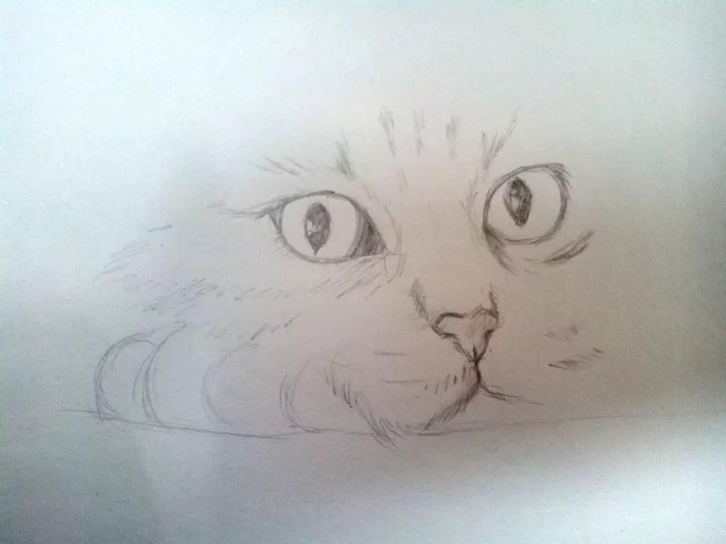 Как нарисовать кота карандашом? Шаг 5. Портреты карандашом - Fenlin.ru