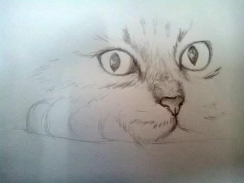 Как нарисовать кота карандашом? Шаг 6. Портреты карандашом - Fenlin.ru