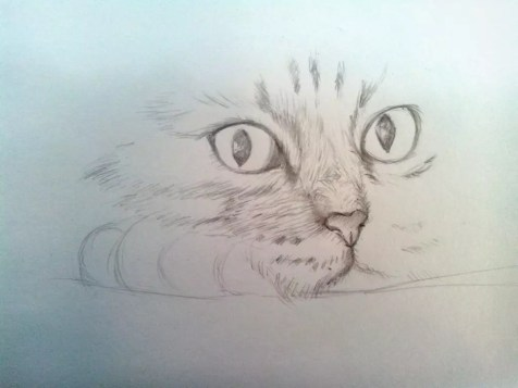 Как нарисовать кота карандашом? Шаг 7. Портреты карандашом - Fenlin.ru