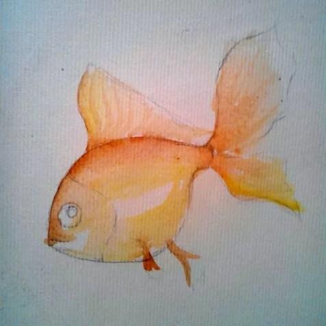 Как нарисовать золотую рыбку? Шаг 3. Портреты карандашом - Fenlin.ru
