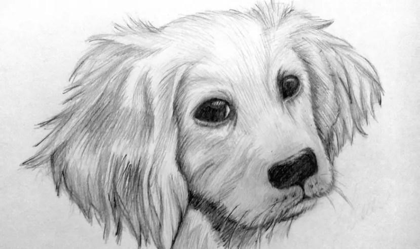 Как нарисовать собаку карандашом? Портреты карандашом - Fenlin.ru