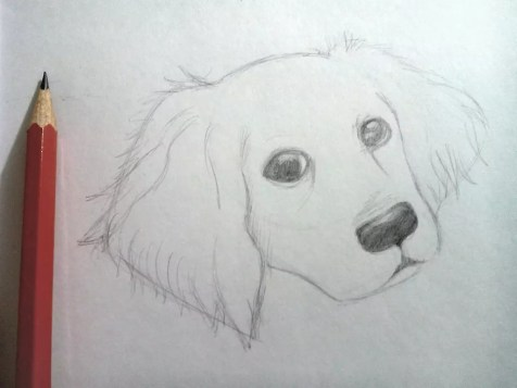 Как нарисовать собаку карандашом? Шаг 6. Портреты карандашом - Fenlin.ru