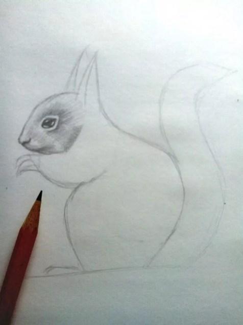 Как нарисовать белку карандашом? Шаг 8. Портреты карандашом - Fenlin.ru