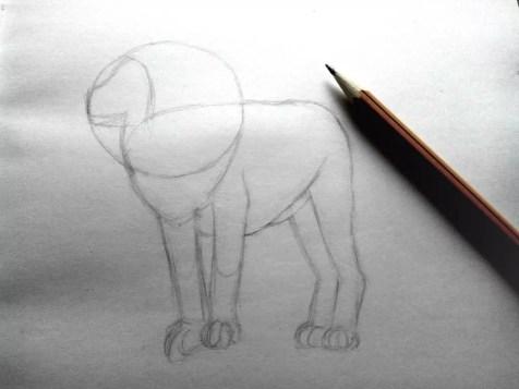 Как нарисовать льва карандашом? Шаг 5. Портреты карандашом - Fenlin.ru